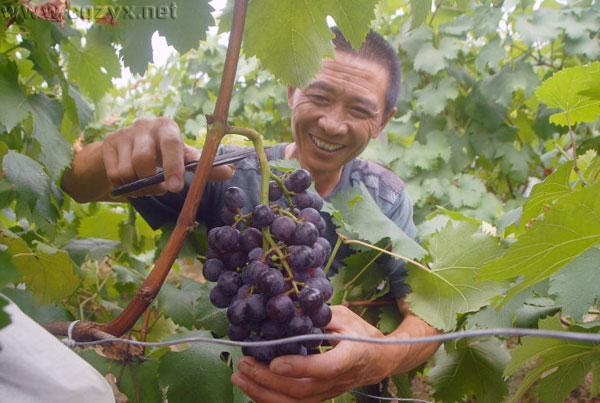 澳门8455新葡萄娱乐在线